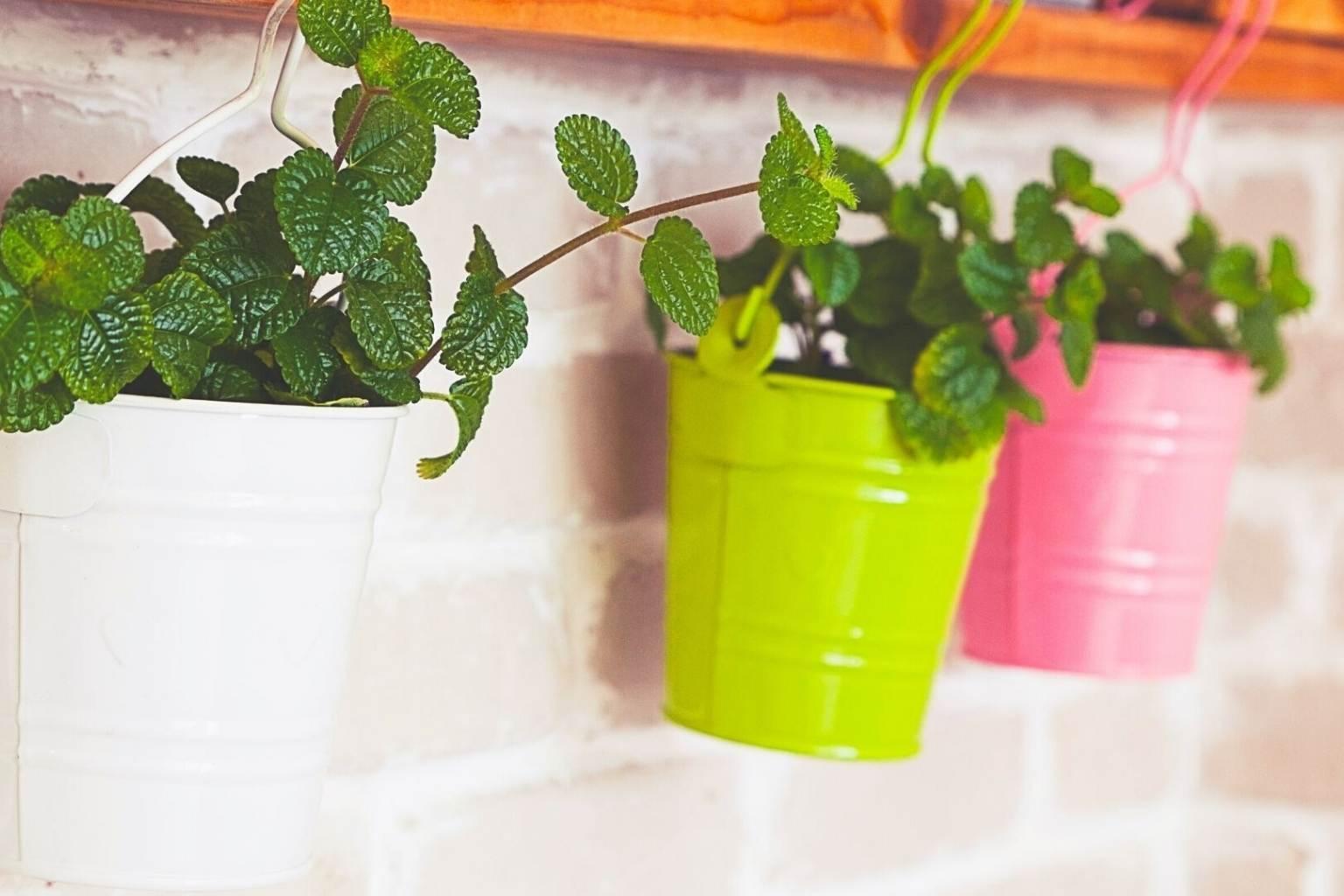 piante da cucina